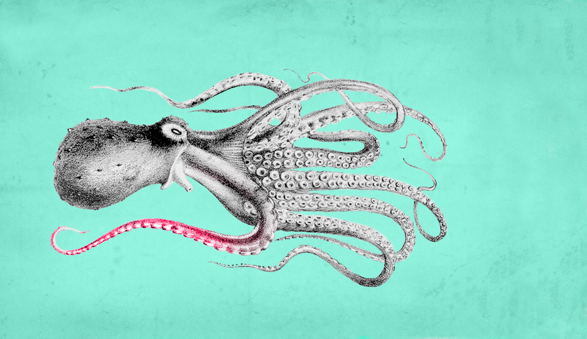 One Tentacle Publishing - Children's Books, Art Books and Prints