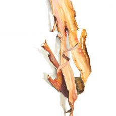 watercolour painting of a piece of bark by artist Tina Wilson