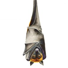 Watercolour painting of a bat hanging upside down by artist Tina Wilson