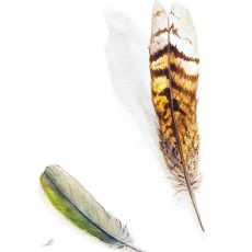 Watercolour painting of bird feathers by artist Tina Wilson