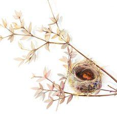 Watercolour painting of an empty bird's nest by artist Tina Wilson