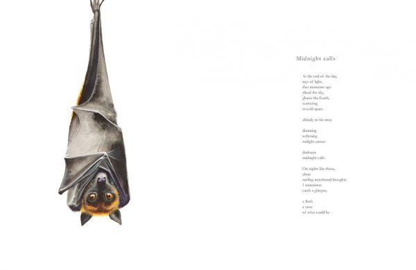 Bat illustration by Tina Wilson for the poem Midnight Calls by Nicholas Bennett