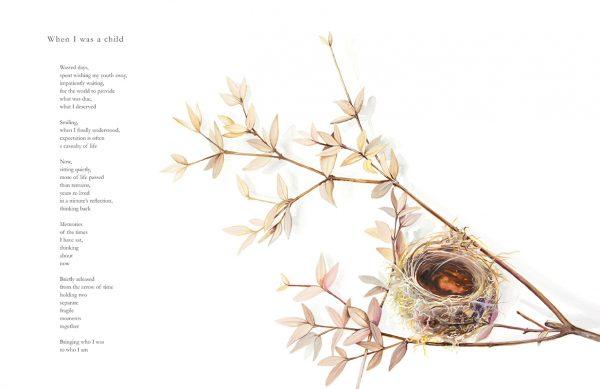 Watercolour illustration of an empty birds nest by artist Tina Wilson